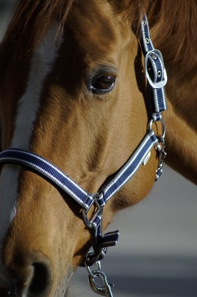 Pferdezubehör Halfter und Führstricke