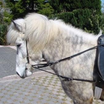 Pferde-Zügel