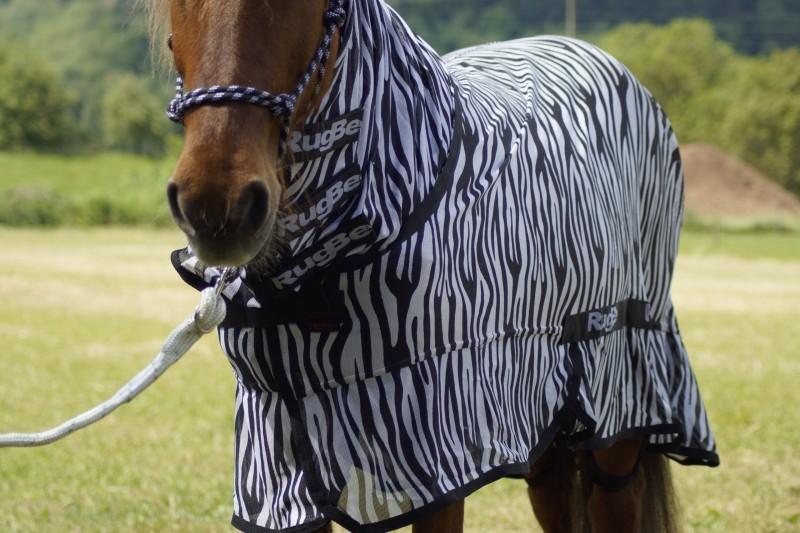 RugBe Zebra Fliegen- & Ekzemerdecke mit Halsteil 3
