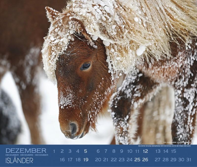 Kalender ISLÄNDER - Edition Boiselle 9