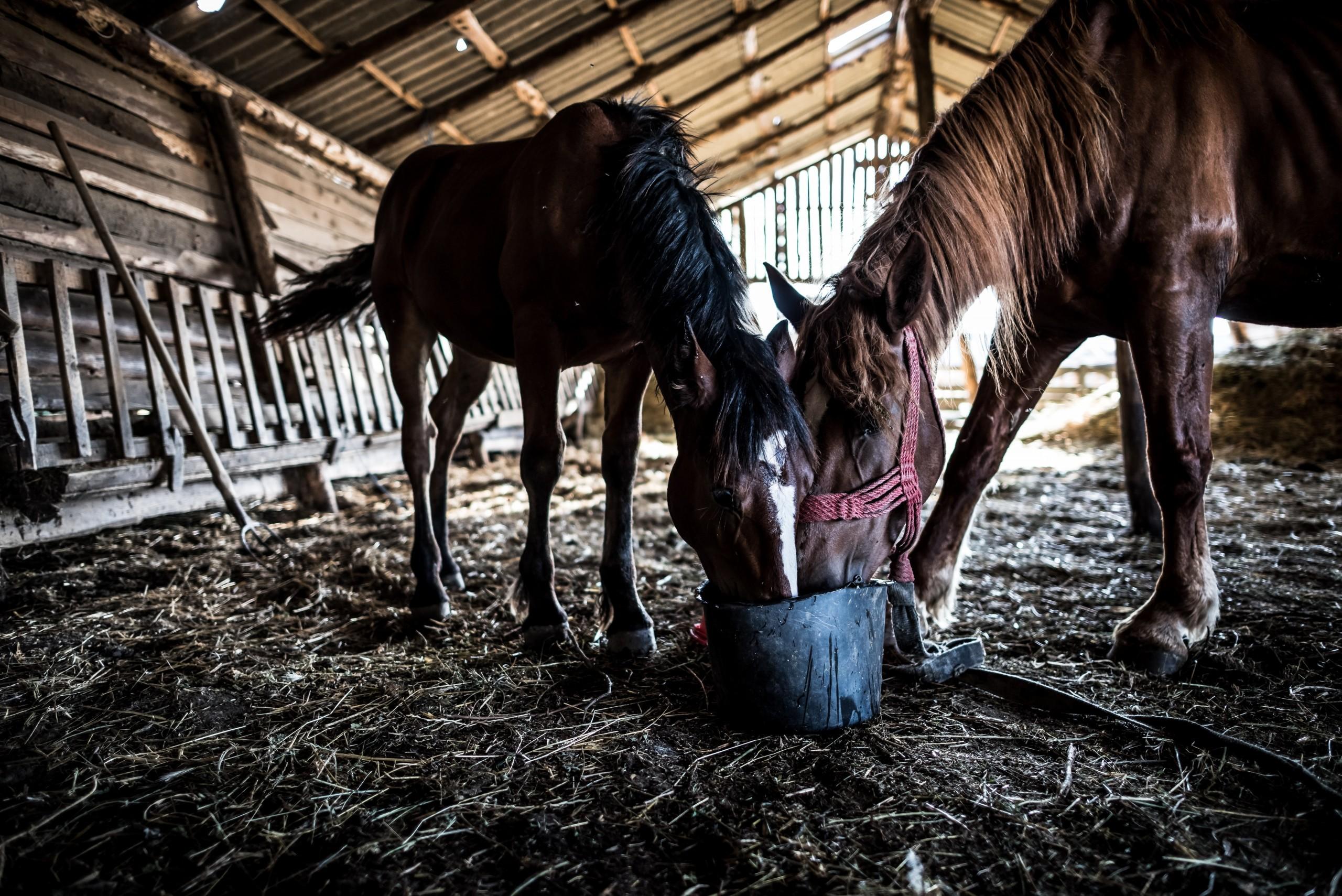 Nahrungsergänzung bei Pferden 1